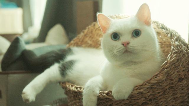 猫探偵の事件簿2