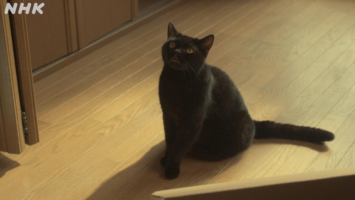 猫探偵の事件簿1