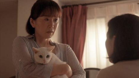 ドキュメンタリードラマ 「猫探偵の事件簿 2」